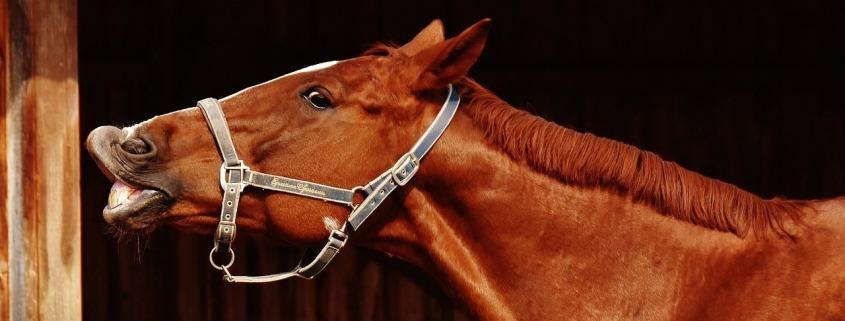 Pferde sind Anti-Depressiva und Coaching auch